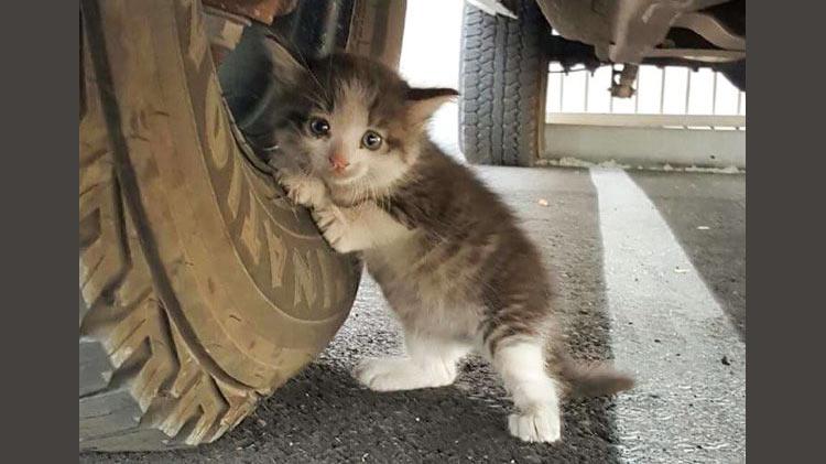 Сексуальный котенок сим рпг